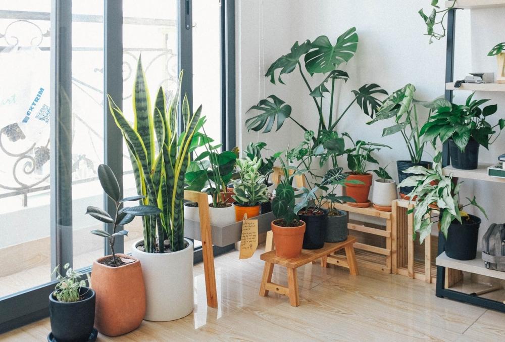 Las Plantas Perfectas para ese Ambiente Especial en el Hogar